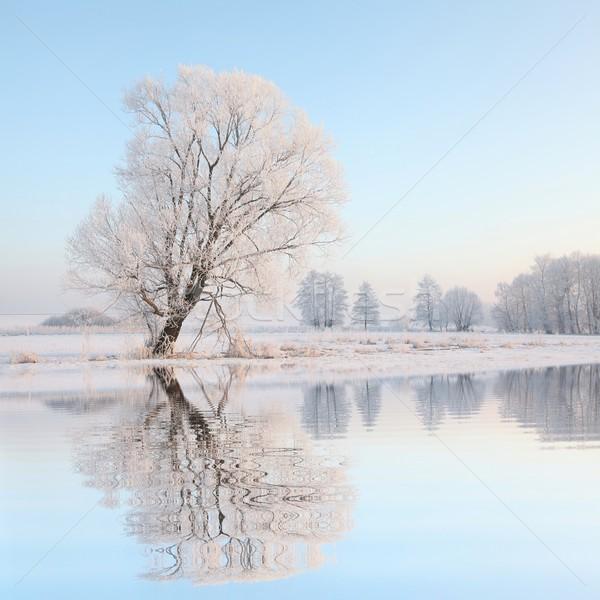пейзаж зима дерево рассвета морозный Сток-фото © nature78