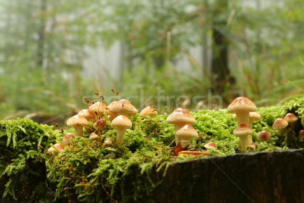 Familia hongos árbol cubierto musgo grupo Foto stock © nature78