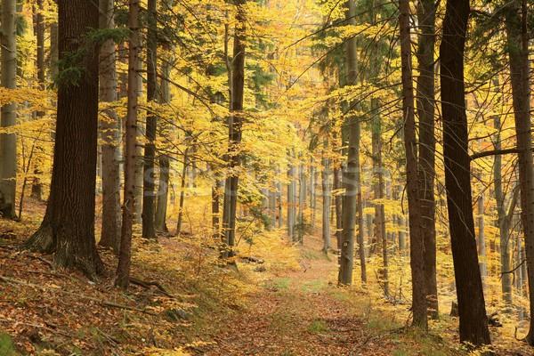 Stock photo: Autumn forest