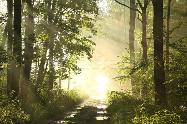 út tavasz erdő hajnal ködös reggel Stock fotó © nature78
