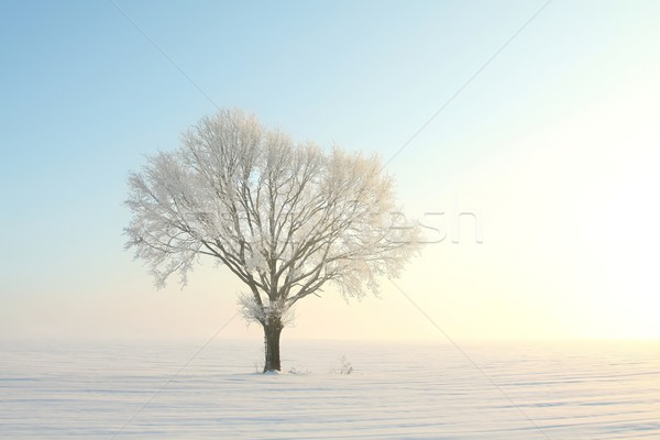 Winter tree at sunrise Stock photo © nature78