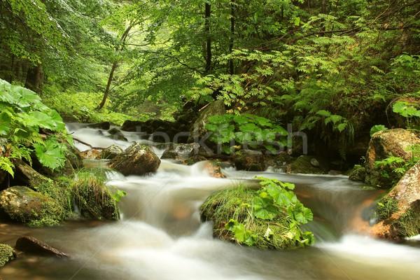 Bos stream vallei landschap berg Stockfoto © nature78