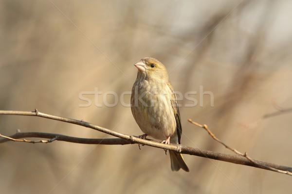 Masculina temprano primavera cielo invierno sol Foto stock © nature78
