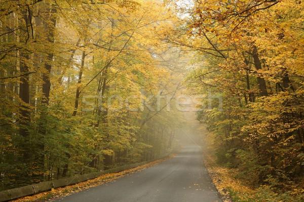 туманный осень утра сельский дороги работает Сток-фото © nature78