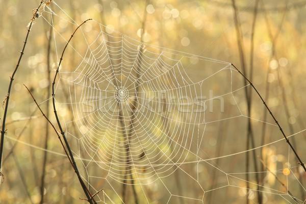 Spinneweb ochtend spinnenweb weide mistig gras Stockfoto © nature78
