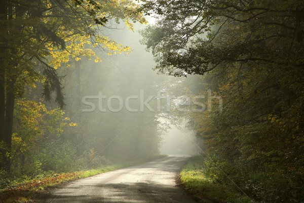 Picturesque forest lane at dawn Stock photo © nature78