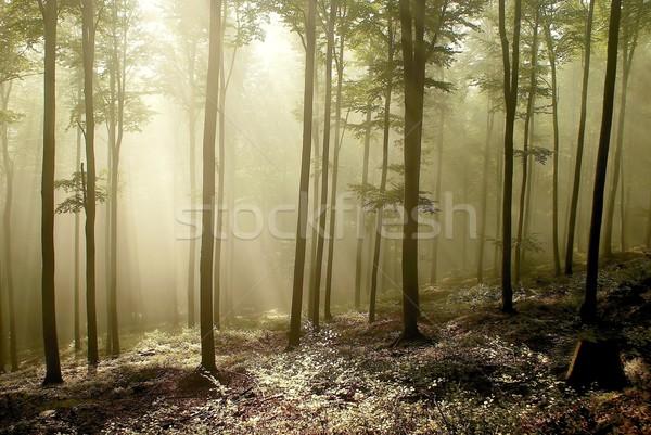 Puslu sonbahar orman fotoğraf dağlar merkezi Stok fotoğraf © nature78