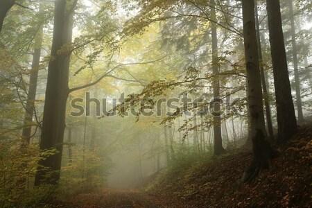 Camino otono forestales lluvioso día paisaje Foto stock © nature78