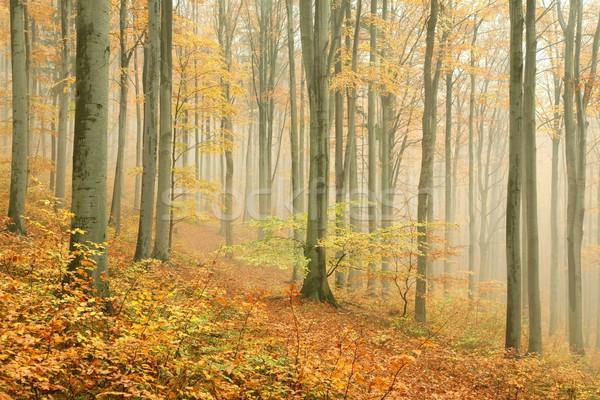 Stock fotó: ősz · erdő · hegy · köd · tájkép · háttér