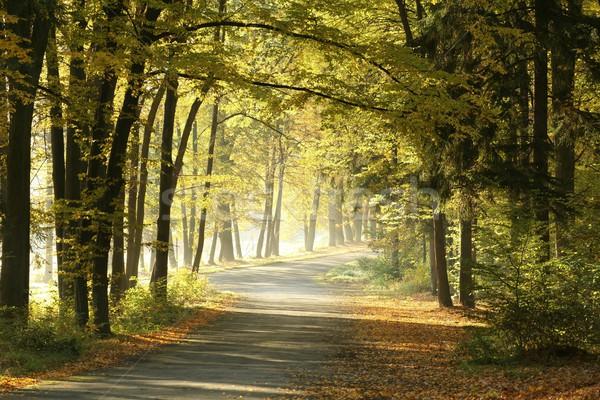 Vidéki út hajnal őszi erdő reggel levél Stock fotó © nature78