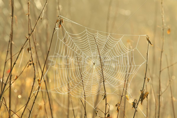 Spider web Stock photo © nature78