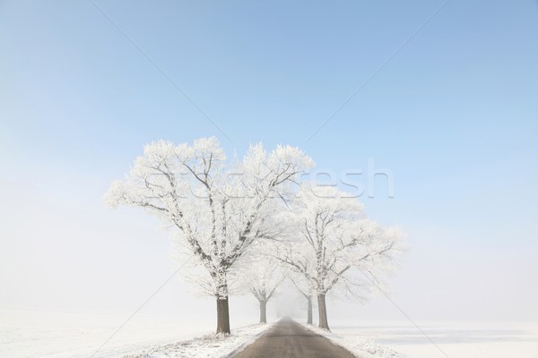 Trees on a sunny winter morning Stock photo © nature78