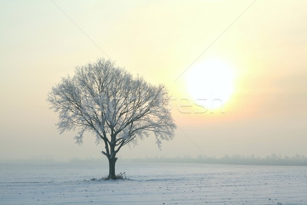 Frosted tree at dawn Stock photo © nature78