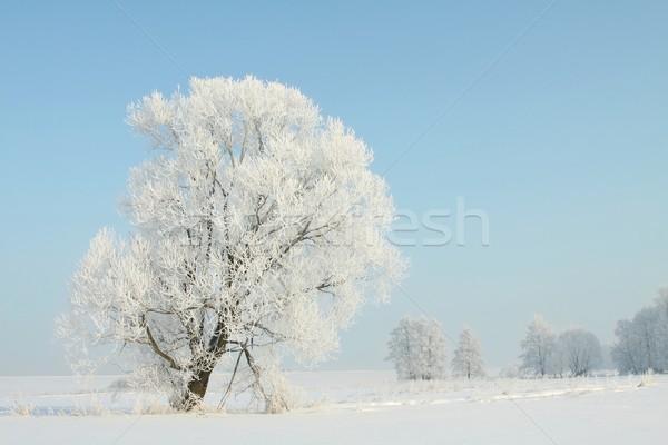 Tél tájkép hajnal fa kék ég természet Stock fotó © nature78