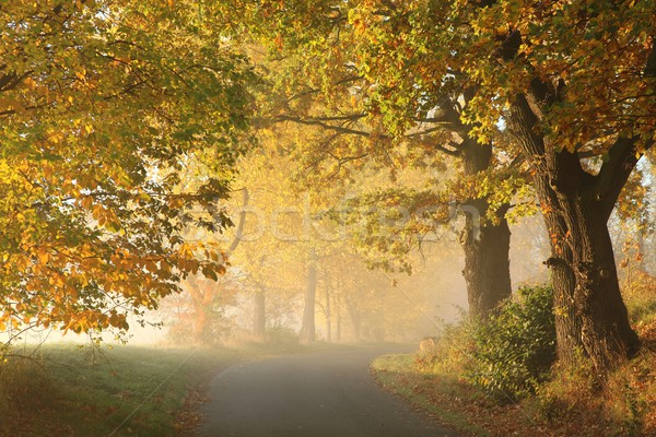 Automne paysages aube rural route misty Photo stock © nature78