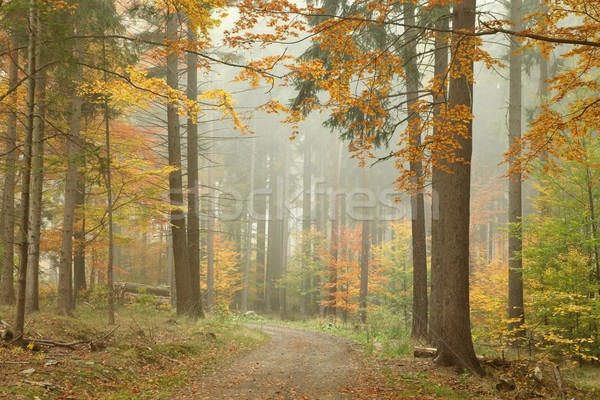Trail through autumn forest Stock photo © nature78