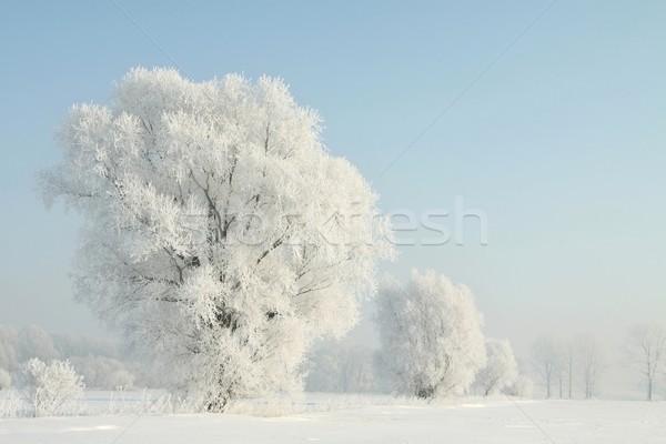 морозный зима дерево солнце Сток-фото © nature78