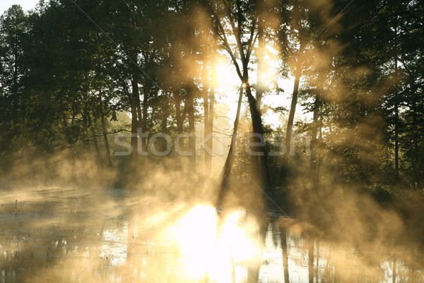 Stock photo: Misty deciduous forest at dawn
