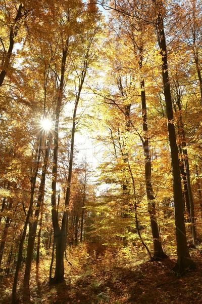 осень лес утра солнце свет Сток-фото © nature78