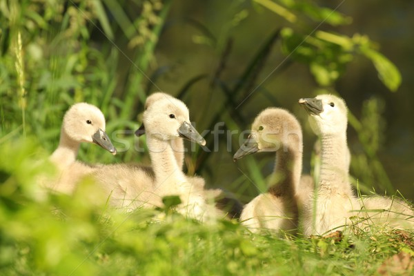 Famille jeunes bord forêt étang Photo stock © nature78