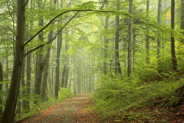 パス 霧の 秋 森林 道路 自然 ストックフォト © nature78