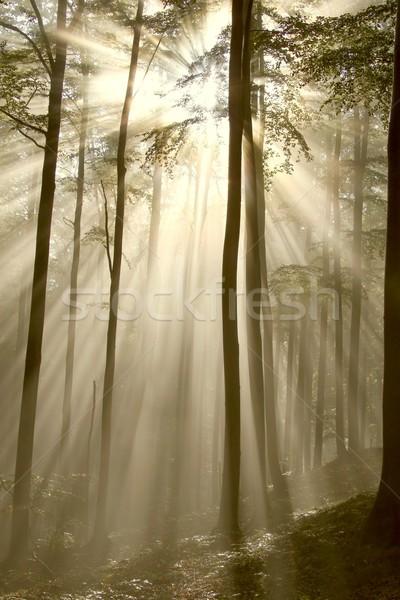 Puslu sonbahar orman güneş güneş ışığı Stok fotoğraf © nature78