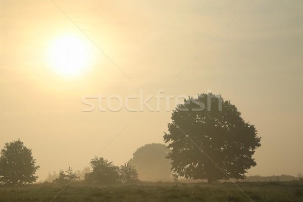 Carvalho nebuloso manhã outono grama Foto stock © nature78