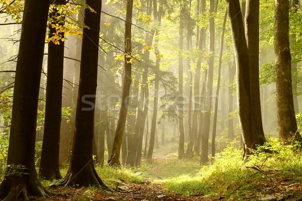 Misty percorso foresta boschi Foto d'archivio © nature78