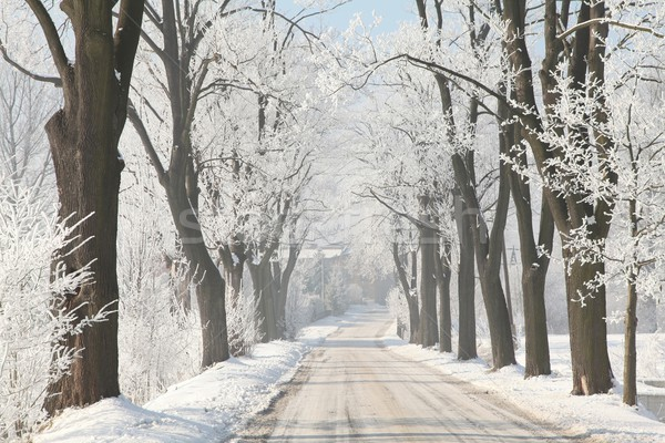Winter country road Stock photo © nature78