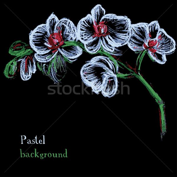 Kézzel készített rajz pasztell virágmintás orchidea virág Stock fotó © naum