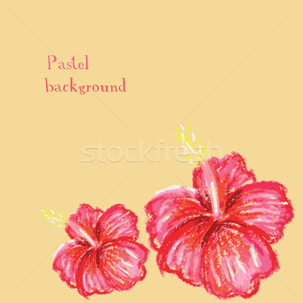 Handgemaakt tekening pastel hibiscus bloem water Stockfoto © naum