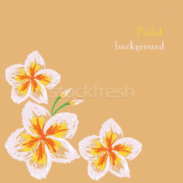 handmade drawing pastel chalks frangipani flower background Stock photo © naum