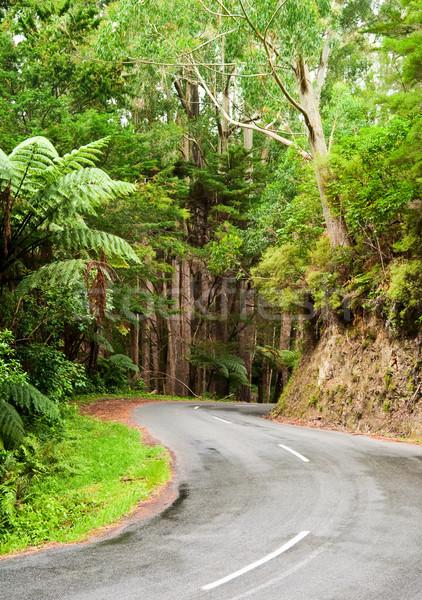Rainforest road Stock photo © naumoid