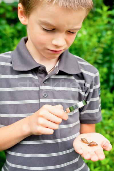 Kid observing snails Stock photo © naumoid