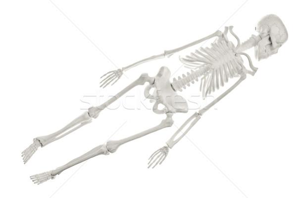 Skeleton Stock photo © naumoid