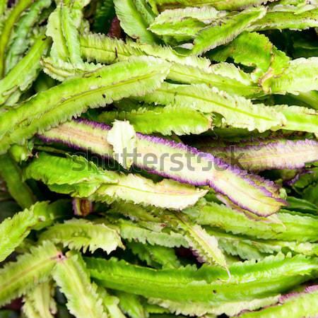 Winged Bean Stock photo © naumoid