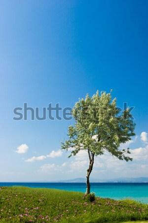 Olijfboom Grieks landschap zonnige strand Stockfoto © naumoid