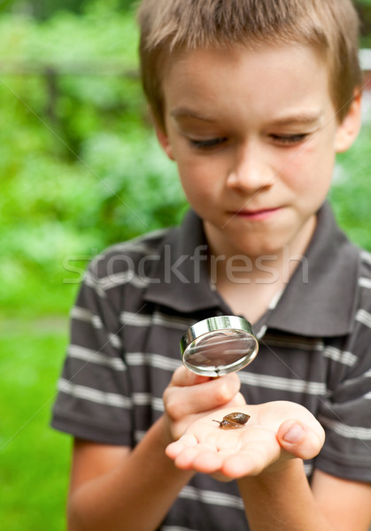 Kid observing snail Stock photo © naumoid