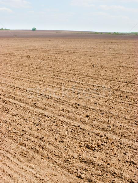 Plowed field Stock photo © naumoid
