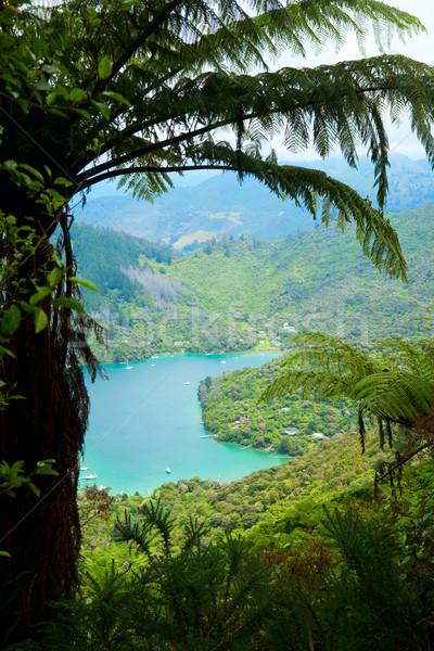 Királynő víz erdő tájkép tenger szépség Stock fotó © naumoid