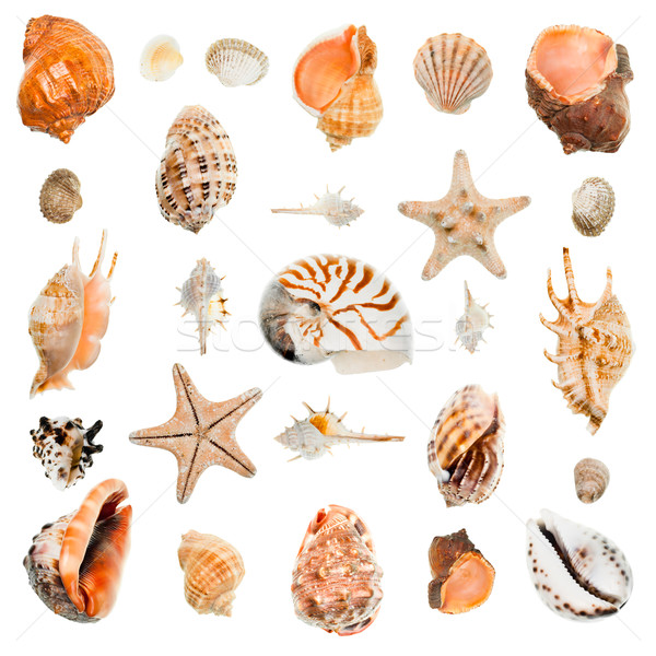 Seashells collection Stock photo © naumoid