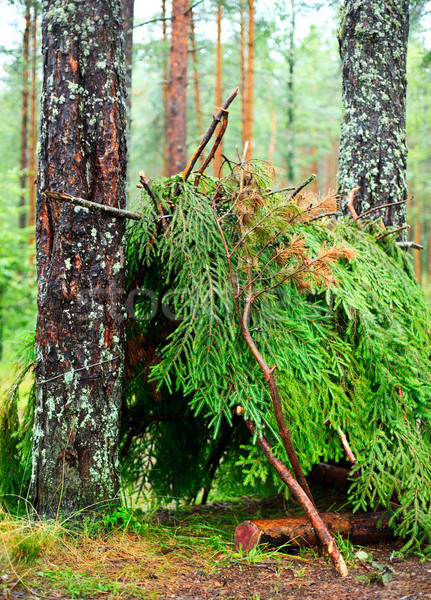 Onderdak lege boom bos camping Stockfoto © naumoid