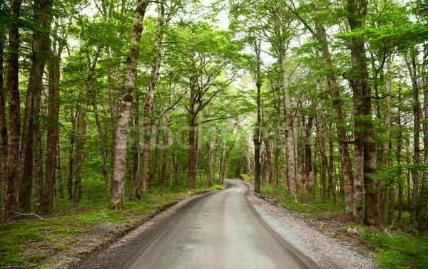 Foresta pluviale strada strada sterrata Neozelandese foresta natura Foto d'archivio © naumoid