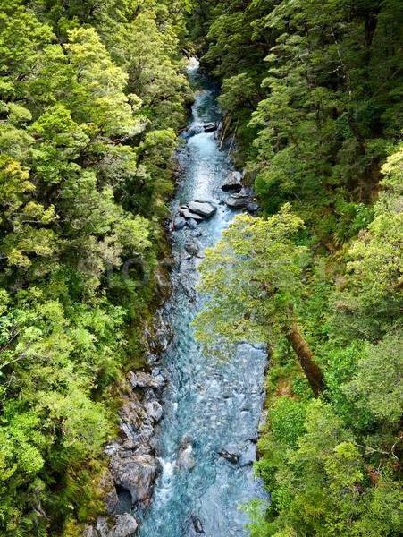 Rainforest river Stock photo © naumoid