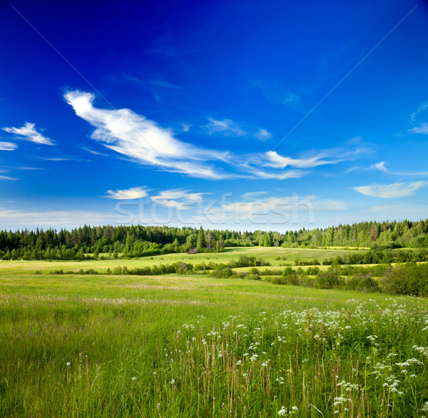 Summer meadow Stock photo © naumoid