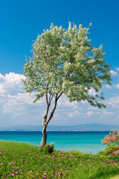 Olajfa napos görög vízpart égbolt víz Stock fotó © naumoid