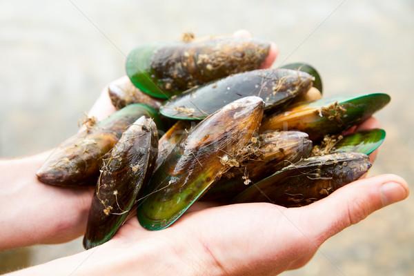 Greenshell mussels Stock photo © naumoid