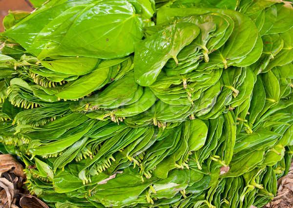 Betel Leaves Stock photo © naumoid