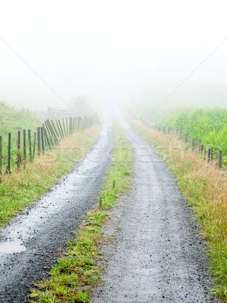 Misty road Stock photo © naumoid