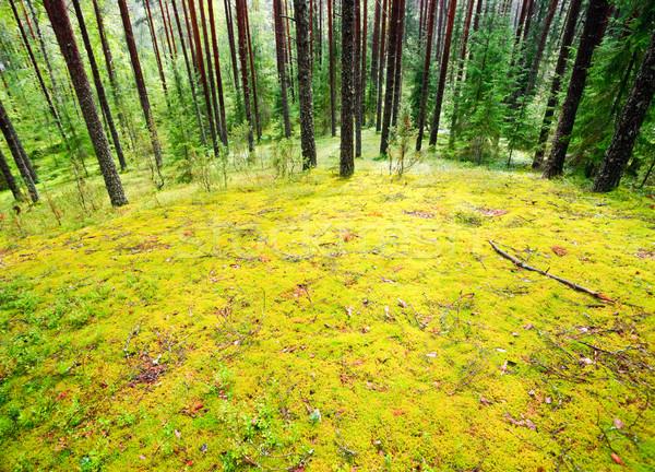 Mossy meadow Stock photo © naumoid